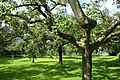Alphen boomgaard.jpg