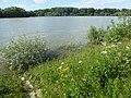 Altrhein an der Rheinschanzinsel.jpg