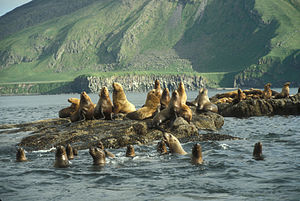 Marine Mammal Protection Act - One species of marine mammal: the Steller sea lion - this haul rests on rocks located on Amak Island.