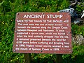 Ancient Stump Sign at Beverly Beach State Park.jpg