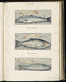 Animal drawings collected by Felix Platter, p1 - (121).jpg