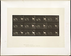 Animal locomotion. Plate 687 (Boston Public Library).jpg