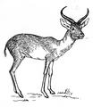 Antelope 2 (PSF).png