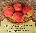 Apfel 122 Rheinischer Bohnapfel (fcm).jpg