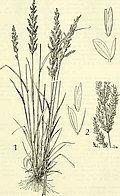 Aquatic and wetland plants of southwestern United States (1972) (19753349941).jpg