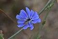 Araignées, insectes et fleurs de la forêt de Moulière 3 (Le Gâchet de Villiers) (28843040970).jpg