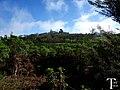 Arboles sin hojas - panoramio.jpg