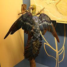 Archäopteryx