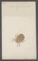 Argas - Print - Iconographia Zoologica - Special Collections University of Amsterdam - UBAINV0274 073 02 0002.tif