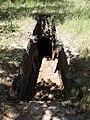 Armeni Friedhof 30.JPG