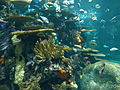 Artificial coral reef Ripley's Aquarium, Myrtle Beach 3.JPG
