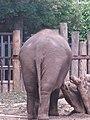 Artis, Zoo, Dierentuin - panoramio (63).jpg