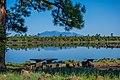 Ashurst Lake (37573096776).jpg