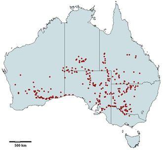 Atriplex nummularia - A. nummularia distribution map