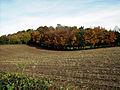 Autumn 1 (3010532476).jpg