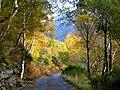 Autumn colour at Strathfarrar - geograph.org.uk - 1029566.jpg