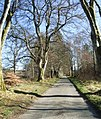 Avenue leading to Torphins from Learney - geograph.org.uk - 774063.jpg