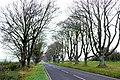 Avenue of Beech Trees near Badbury Rings - geograph.org.uk - 1061831.jpg