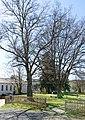 Bäume Skulpturenpark Breidenbach.jpg