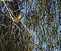 BIRD (14053403588).jpg