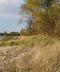 Beachgrass (2 varieties) Black Pond WMA.jpg