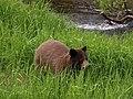 Bear 27.jpg