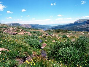 Bear River (Colorado) - Source of Bear River in Flat Tops Wilderness