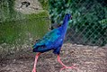 Beautiful bird3.jpg
