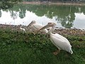 Beauty of Nature 135736.jpg