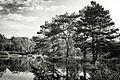 Beaux arbres de Vassivière.jpg
