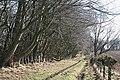 Beech Avenue - geograph.org.uk - 1758229.jpg