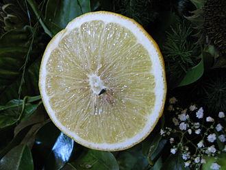 Bergamot orange - Bergamot orange