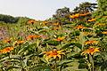 Berlins botaniska trädgård-IMG 8649.jpg