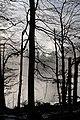 Berngat im Plättelenwald 1.JPG