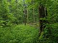 Białowieża National Park, Poland (4663865391).jpg