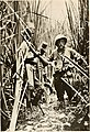 Big game shooting on the equator (1908 (1907)) (20343618486).jpg