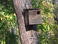 Bird house on a tree in Dnipro, Ukraine 20OCT19.jpg