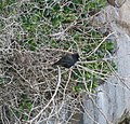 Bird in a Web (31387120011).jpg