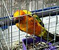 Bird in cage.jpg