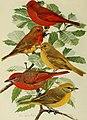 Bird lore (1918) (14568805657).jpg