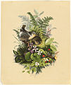 Birds Nesting among Plants and Flowers (Boston Public Library).jpg