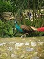 Birdy Bird Park KL.jpg