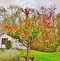 Bloomsburg, Pennsylvania during foliage season - panoramio (32).jpg