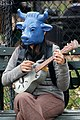 Blue Cow Playing Guitar (3010976674).jpg