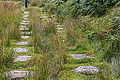 Bodmin Moor, Cornwall. Remains of the Liskeard and Caradon Railway-9121.jpg
