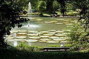 Bogor Botanic Gardens lily pond