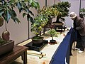 Bonsai exhibition of citizen art for the 2018 Culture Day national holiday.jpg