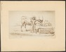 Bos indicus - 1700-1880 - Print - Iconographia Zoologica - Special Collections University of Amsterdam - UBA01 IZ21200149.tif