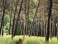 Bosc de Can Deu el 2004 12.jpg