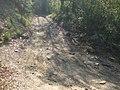Bosco presso il borro di Lavello - panoramio (1).jpg